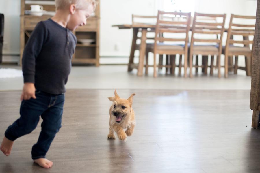 Kerek and Marisa Martin Mount Joy PA living dog breeder