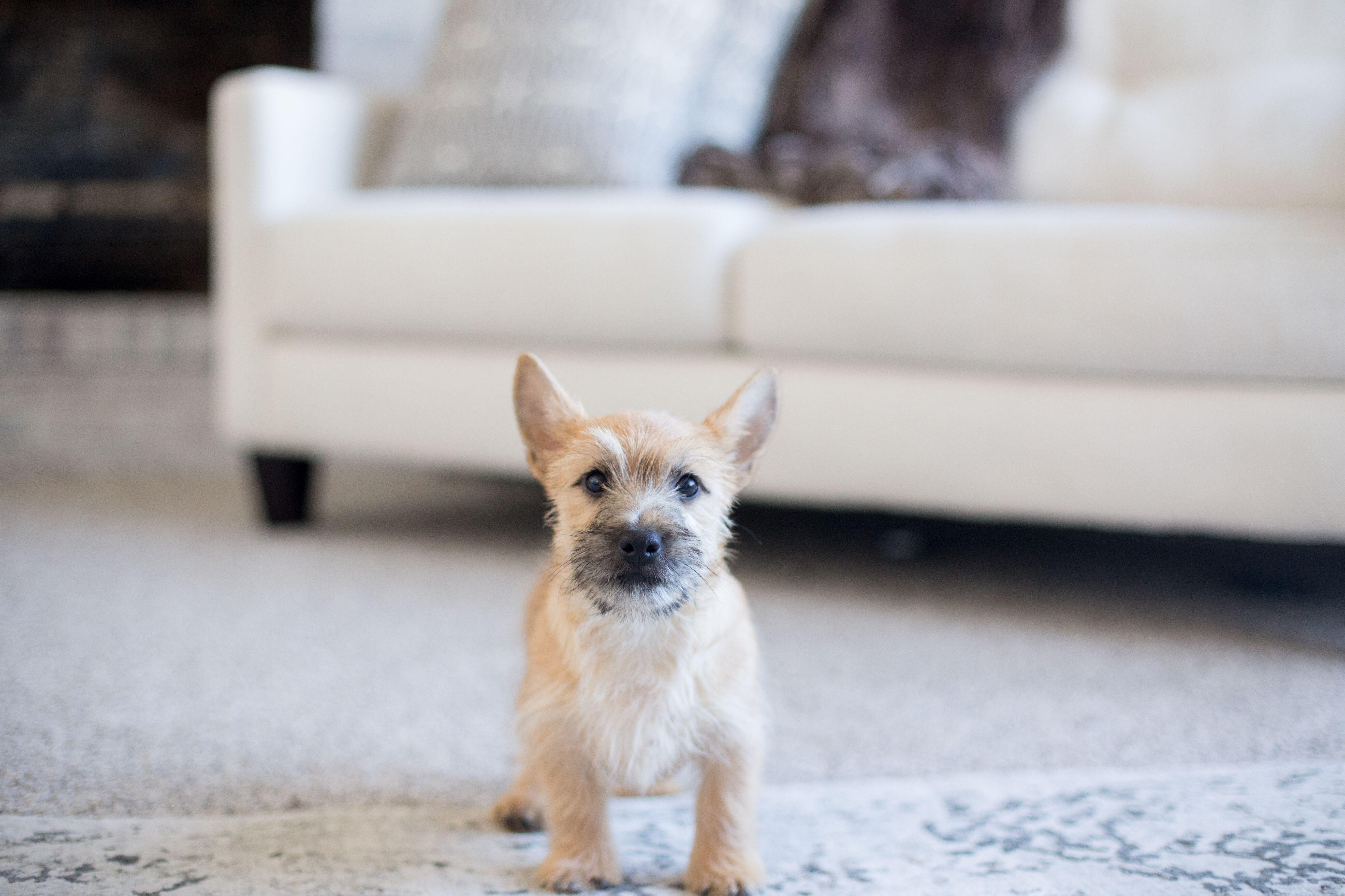 Kerek and Marisa Martin Mount Joy PA pup